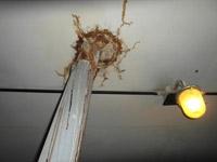 Обследование кровли / Следы протечек по потолку чердака в месте вывода инженерных коммуникаций